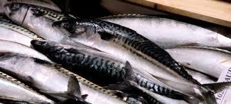 Köpa Färsk fisk