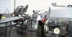 Fish processing machinery