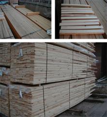 Furu (Pinus sylvestris)